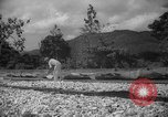 Image of shelling and drying of coconut Caracas Venezuela, 1940, second 16 stock footage video 65675050637