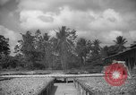 Image of shelling and drying of coconut Caracas Venezuela, 1940, second 23 stock footage video 65675050637