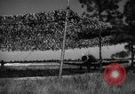 Image of camouflaged net United States USA, 1941, second 56 stock footage video 65675050731