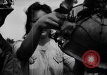 Image of Santo Tomas concentration camp Manila Philippines, 1945, second 43 stock footage video 65675050796