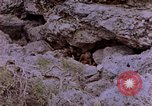 Image of American infantry searching hideouts on Saipan for Japanese soldiers Saipan Northern Mariana Islands, 1944, second 8 stock footage video 65675050872