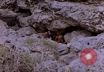 Image of American infantry searching hideouts on Saipan for Japanese soldiers Saipan Northern Mariana Islands, 1944, second 10 stock footage video 65675050872