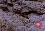 Image of American infantry searching hideouts on Saipan for Japanese soldiers Saipan Northern Mariana Islands, 1944, second 11 stock footage video 65675050872