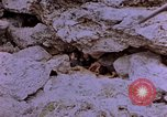 Image of American infantry searching hideouts on Saipan for Japanese soldiers Saipan Northern Mariana Islands, 1944, second 12 stock footage video 65675050872
