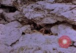 Image of American infantry searching hideouts on Saipan for Japanese soldiers Saipan Northern Mariana Islands, 1944, second 13 stock footage video 65675050872