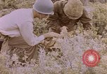 Image of American infantry searching hideouts on Saipan for Japanese soldiers Saipan Northern Mariana Islands, 1944, second 56 stock footage video 65675050872
