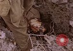 Image of American infantry searching hideouts on Saipan for Japanese soldiers Saipan Northern Mariana Islands, 1944, second 60 stock footage video 65675050872