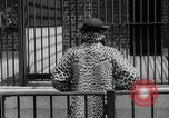 Image of fur fashions New York City USA, 1935, second 14 stock footage video 65675051172