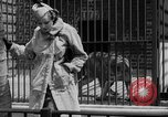 Image of fur fashions New York City USA, 1935, second 23 stock footage video 65675051172