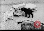 Image of baby animals Europe, 1960, second 6 stock footage video 65675051193