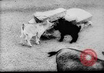 Image of baby animals Europe, 1960, second 7 stock footage video 65675051193