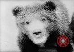 Image of baby animals Europe, 1960, second 17 stock footage video 65675051193