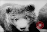 Image of baby animals Europe, 1960, second 18 stock footage video 65675051193