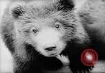 Image of baby animals Europe, 1960, second 19 stock footage video 65675051193
