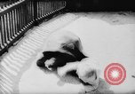 Image of baby animals Europe, 1960, second 30 stock footage video 65675051193