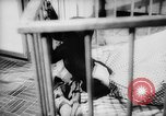 Image of baby animals Europe, 1960, second 34 stock footage video 65675051193