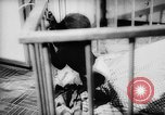 Image of baby animals Europe, 1960, second 35 stock footage video 65675051193