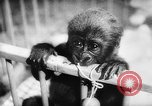 Image of baby animals Europe, 1960, second 37 stock footage video 65675051193