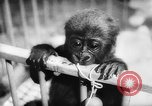 Image of baby animals Europe, 1960, second 38 stock footage video 65675051193