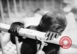 Image of baby animals Europe, 1960, second 40 stock footage video 65675051193