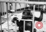 Image of baby animals Europe, 1960, second 42 stock footage video 65675051193