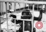 Image of baby animals Europe, 1960, second 43 stock footage video 65675051193