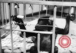 Image of baby animals Europe, 1960, second 44 stock footage video 65675051193