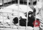 Image of baby animals Europe, 1960, second 46 stock footage video 65675051193