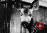 Image of baby animals Europe, 1960, second 47 stock footage video 65675051193