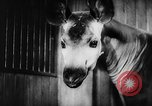 Image of baby animals Europe, 1960, second 48 stock footage video 65675051193