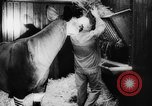 Image of baby animals Europe, 1960, second 50 stock footage video 65675051193