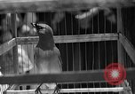 Image of birds Mexico, 1936, second 17 stock footage video 65675051388