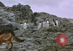 Image of South Pole expedition South Pole, 1939, second 19 stock footage video 65675051521