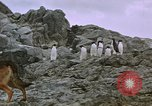 Image of South Pole expedition South Pole, 1939, second 20 stock footage video 65675051521