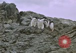 Image of South Pole expedition South Pole, 1939, second 21 stock footage video 65675051521