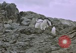 Image of South Pole expedition South Pole, 1939, second 22 stock footage video 65675051521