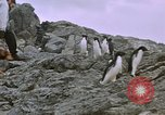 Image of South Pole expedition South Pole, 1939, second 24 stock footage video 65675051521