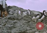 Image of South Pole expedition South Pole, 1939, second 25 stock footage video 65675051521