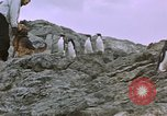 Image of South Pole expedition South Pole, 1939, second 26 stock footage video 65675051521