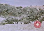 Image of South Pole expedition South Pole, 1939, second 37 stock footage video 65675051521
