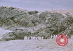 Image of South Pole expedition South Pole, 1939, second 38 stock footage video 65675051521