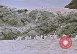 Image of South Pole expedition South Pole, 1939, second 41 stock footage video 65675051521