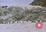 Image of South Pole expedition South Pole, 1939, second 44 stock footage video 65675051521