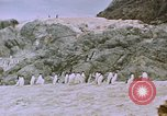 Image of South Pole expedition South Pole, 1939, second 45 stock footage video 65675051521