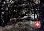 Image of People visiting a forest in their 1939 Ford car United States USA, 1939, second 14 stock footage video 65675051552