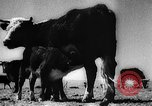 Image of economic development soon after end of World War II Europe, 1945, second 61 stock footage video 65675051623
