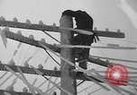 Image of damage from sleet Duluth Minnesota USA, 1935, second 33 stock footage video 65675051631