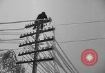 Image of damage from sleet Duluth Minnesota USA, 1935, second 36 stock footage video 65675051631