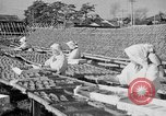 Image of Japanese people Japan, 1943, second 25 stock footage video 65675051699