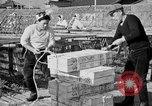 Image of Japanese people Japan, 1943, second 39 stock footage video 65675051699